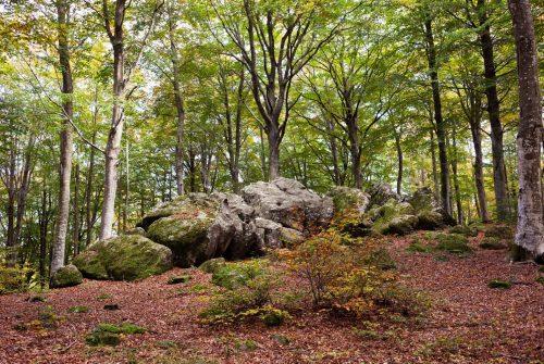 bosco monte amiata